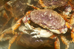 http://www.dreamstime.com/stock-images-crab-image29289744